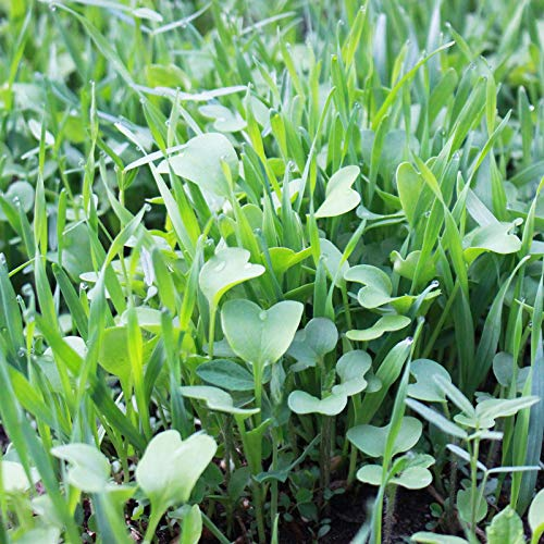 Garden Cover Crop Mix Seeds - Blend of Gardening Cover Crop Seeds: Hairy Vetch, Winter Peas, Forage Collards, Winter Rye, Crimson Clover, More (5 Lb Bag)