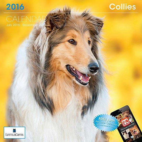LittleGifts Collie 2016 Calendar (1236)