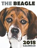 The Beagle 2018 Calendar
