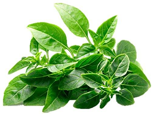 (Basil, Spicy Globe Herb Seeds Heirloom Microgreens or Garden Bulk Organic Wholesale #249 (100 Seeds))