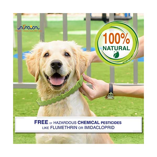 Arava Flea & Tick Prevention Collar - for Dogs & Puppies - Length-25'' - 11 Natural Active Ingredients - Safe for Babies & Pets - Safely Repels Pests - Enhanced Control & Defense - 6 Months Protection 4