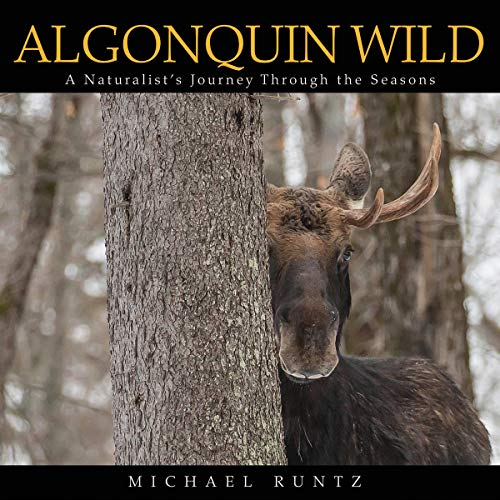 Algonquin Wild: A Naturalists Journey Through the Seasons Michael Runtz