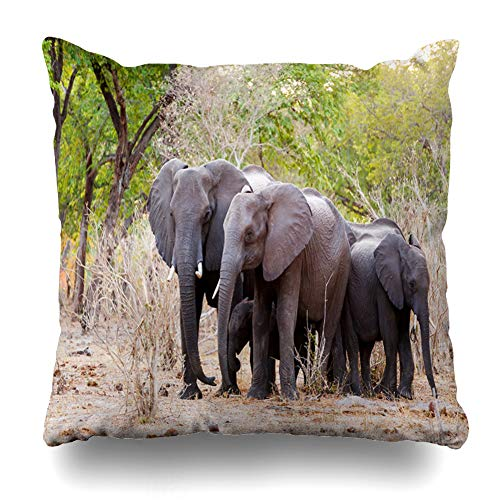 Ahawoso Throw Pillow Cover Herbivore Africa Herd African Elephants Drinking Muddy Wilderness Waterhole Caprivi Nature Africana Home Decor Pillow Case Square Size 18x18 Inches Zippered Pillowcase