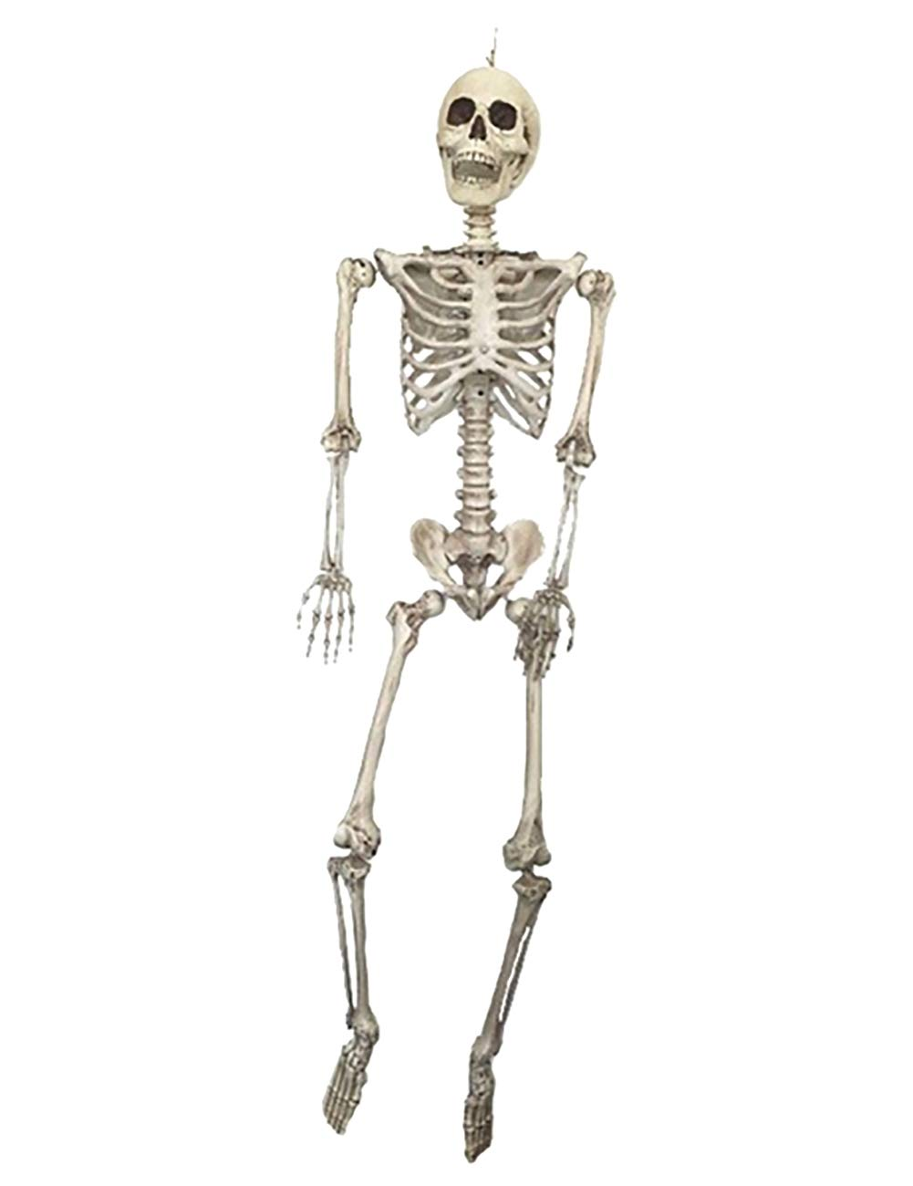 THEE Scary Skull Bone Party Human Skeleton Anatomical Model Halloween Decoration Height 90cm/35''