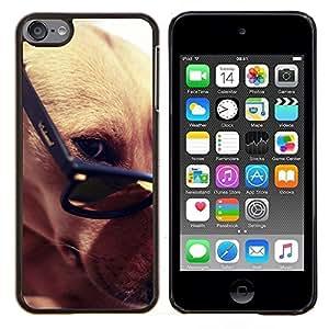 TECHCASE---Cubierta de la caja de protección para la piel dura ** Apple iPod Touch 6 6th Touch6 ** --Greyhound gafas inteligentes del perro de Brown