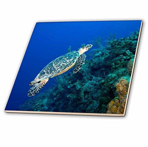 - 3dRose ct_74847_2 Cayman Islands, Hawksbill Sea Turtle and Coral Reef -Ca42 Pso0091-Paul Souders-Ceramic Tile, 6-Inch