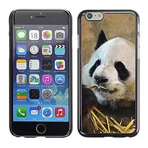 "Carcasa Funda Case //Panda V0000244// Apple iPhone 6 4.7"""