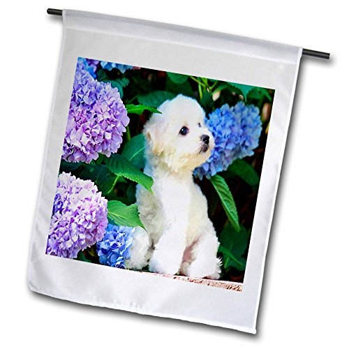 3d Rose 3dRose fl_80886_1 Adorable Bichon Frise Puppy Amo...