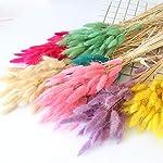 20pcs-Natural-Dried-Flowers-lagurus-White-Artificial-Flowers-Colorful-Fake-Rabbit-Tail-Grass-ovatus-Foxtail-Bouquet-Long-BunchesPurple
