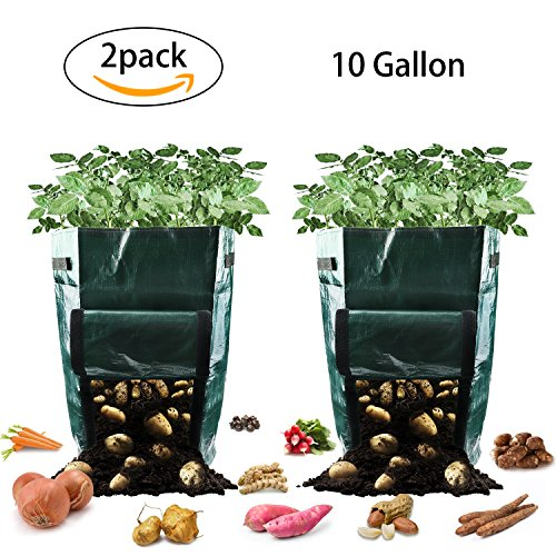 Potato Grow Bags, 10 Gallon Garden Planter Plant Growing Bag with Flap and Handles Heavy Duty and Durable Potato Pots for Vegetables, Fruit, Carrot, Tomato, Onion, 2 Pack by GKCI
