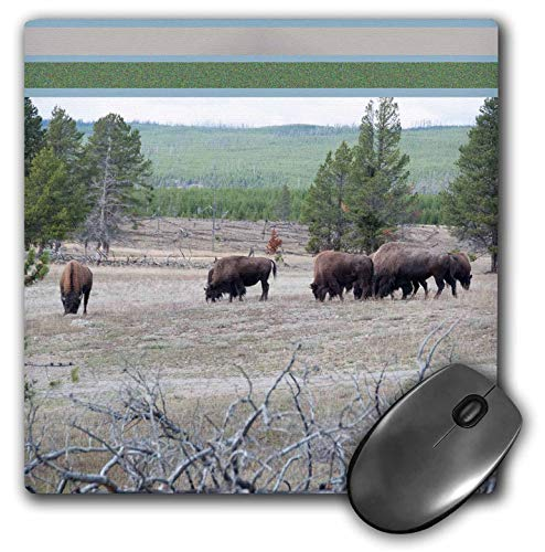 3dRose Jos Fauxtographee- Framed Top Bison Foraging - A Feild of Bison grazing on The Grass in Yellowstone with top Frame - Mousepad (mp_294261_1)