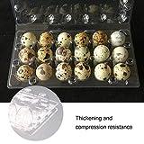 YARNOW 50pcs Quail Egg Cartons 18 Grids Quail Eggs