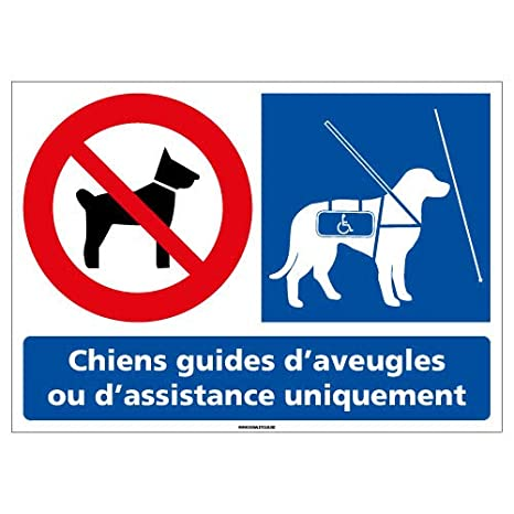 Protection Anti-UV Dimensions 105x75 mm Adh/ésif Chiens Interdits sauf Chiens Guides dAveugles