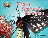 Queen Alexandra's Birdwing, John Stidworthy, 1597163953
