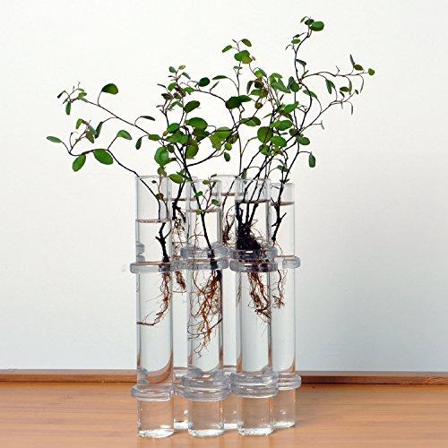 Monkeyjack 6/pi/èces Creative /éprouvettes en verre /à suspendre Fleur Bouteille Micro-landscape Pot de fleurs Vase Pot de fleurs