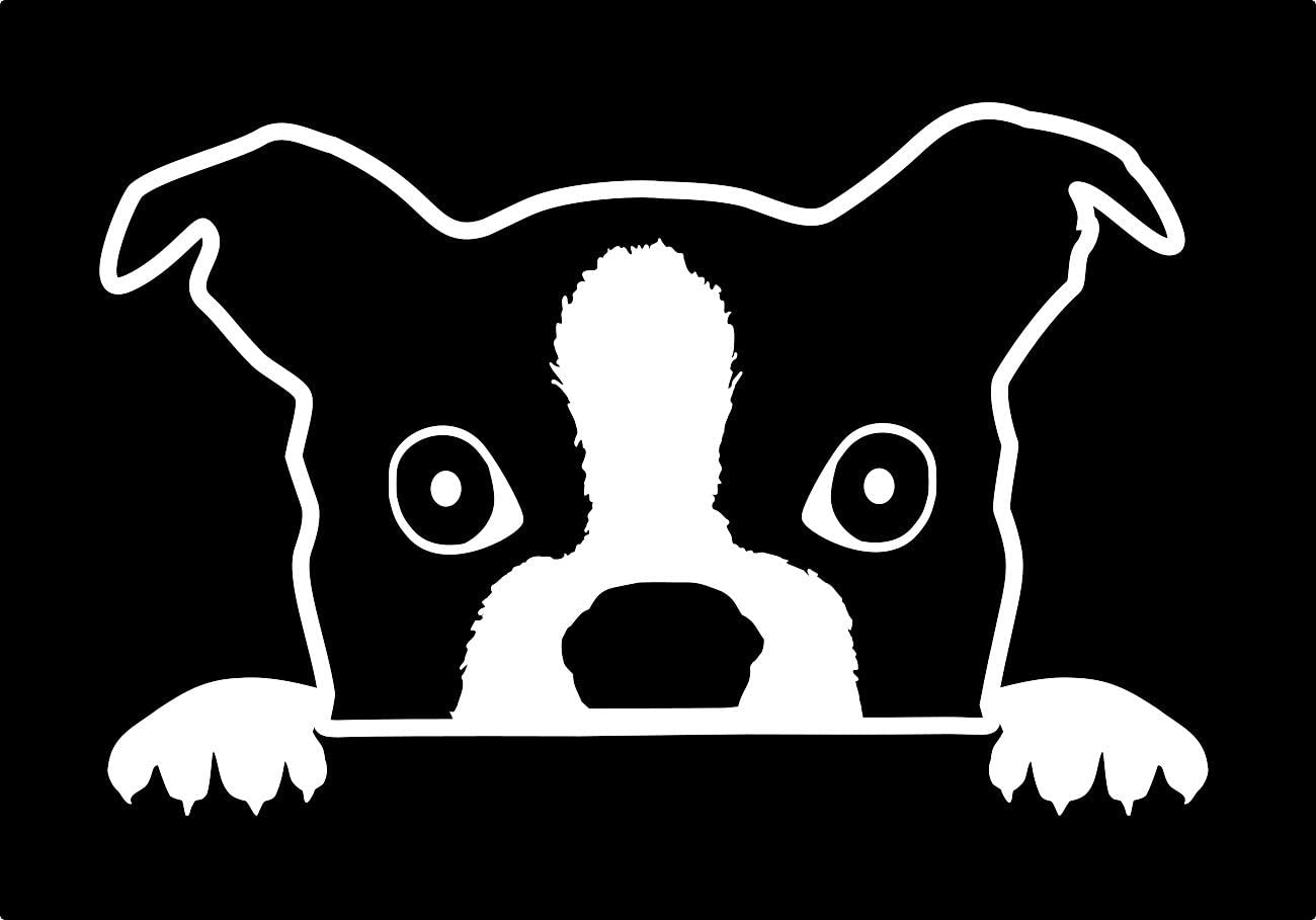 UR Impressions Boston Terrier Peeking Decal Vinyl Sticker Graphics for Cars Trucks SUV Vans Walls Windows Laptop|White|7 X 4.4 inch|URI043A