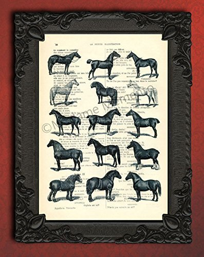 Horse breeds collection in black and white wall decor, horses equestrian poster