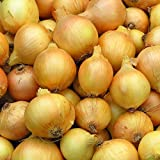 Utah Yellow Sweet Spanish Onion Garden Seeds - 5 Lb Bulk - Non-GMO, Heirloom Vegetable Gardening Seeds