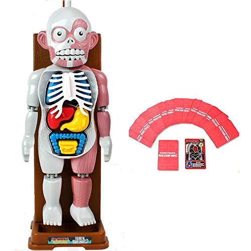 JQ TREND HUMAN BODY MODEL 人体模型おもちゃ 背景音楽おもちゃテーブルゲーム 恐怖ゲーム ドキドキ 飛び出す ビックリします!パーティー 罰ゲーム 盛り上がる みんなで遊びましょう! (画像色)