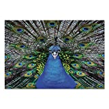 magnificent peacock wall mural Large Wall Mural Sticker [ Peacock,Magnificent Peacock Portrait with Vibrant Colorful Feathers Photo Pattern,Blue Green Brown ] Self-Adhesive Vinyl Wallpaper/Removable Modern Decorating Wall Art
