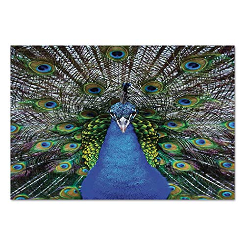 Large Wall Mural Sticker [ Peacock,Magnificent Peacock Portrait with Vibrant Colorful Feathers Photo Pattern,Blue Green Brown ] Self-Adhesive Vinyl Wallpaper/Removable Modern Decorating Wall Art