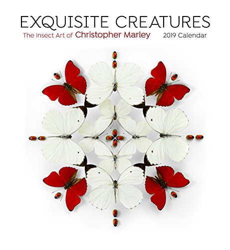- Exquisite Creatures: Insect Art 2019 Wall Calendar
