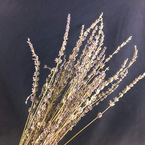 小麦の耳、小麦、尾の草、乾燥した大麦、パン屋、穀物の装飾、撮影小道具。 ラベンダーの束 (約50センチ)