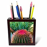 3dRose Danita Delimont - Cactus - Spain, Canary Islands, La Gomera, Barrell cactus detail - 5 inch tile pen holder (ph_257880_1)