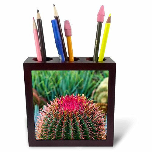 3dRose Danita Delimont - Cactus - Spain, Canary Islands, La Gomera, Barrell cactus detail - 5 inch tile pen holder (ph_257880_1) by 3dRose