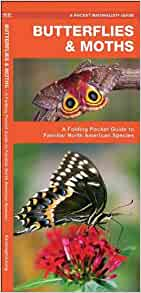 Massachusetts Butterflies Moths A Folding Pocket Guide To Familiar Species Pocket Naturalist Guide Series