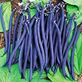 Zoomy Far: Climbing Violette BS Seeds (AVG 30-50) Seeds X 1 Packet