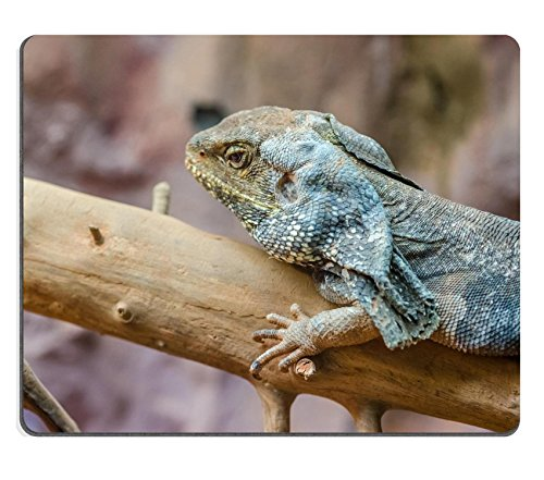 MSD Natural Rubber Mousepad IMAGE 20988032 Frilled Lizard