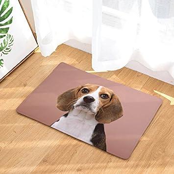 Amazon Com Yq Park Door Mat Indoor Outdoor Carpet Entrance Mat Pet