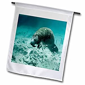 Florene Underwater Animals - Manatee Underwater - 18 x 27 inch Garden Flag (fl_50222_2)