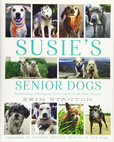 Susie's Senior Dogs (Best Friend Pet Store Virginia)