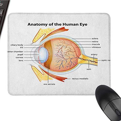 (Personalized Mouse pad Educational,Human Eye Anatomy Cornea Iris Pupils Optic Nerves Graphic Print, Coral Mustard Baby Blue Waterproof Mice Pad 15.7 x23.6 INCH )