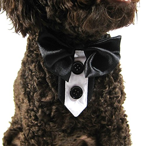 Tie Without Jacket (Alfie Pet by Petoga Couture - Gaby Adjustable Bow Tie Collar for Dogs & Cats - Color: Black, Size: Large)