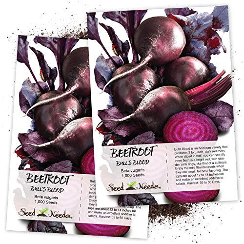 (Seed Needs, Bull's Blood Beet (Beta vulgaris) Twin Pack of 1,000 Seeds Each Non-GMO)