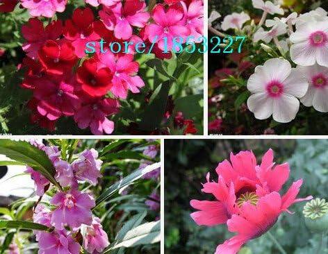 Balsamine semillas, bálsamo del jardín, plantas DIY latas novedad semillas de flores de oficina siembra mini-plantas: Amazon.es: Jardín