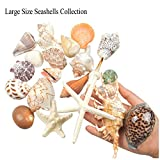 Jangostor 21 PCS Medium Sea Shells Mixed Ocean
