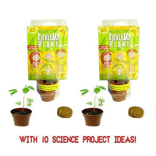 (TickleMe Plant Birthday Party Favors (Pack of 2) (Leaves Fold When You Tickle It) Minutes Later the Leaves Re-open. Great Science Giveaway. Fun, Green and Educational. Grow Indoors. It Even)