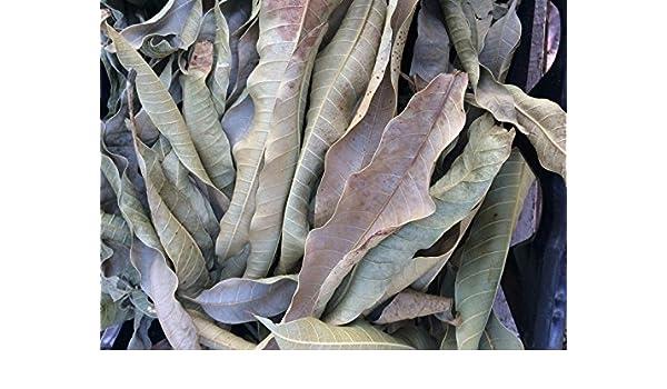 Shoopy Star 1110 Las semillas de cilantro 10g Chia Tai ...