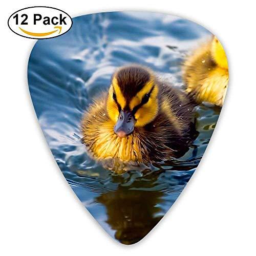 Ducks Swimming Classic Guitar Pick (12 Pack) for Electric Guita Bass