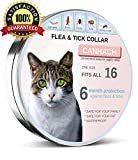 Flea collar for cats Natural Cat Flea and Tick Collar (Adjustable) Protects Kittens - Adults - Seniors | Hypoallergenic - Waterproof Protection | Allergy-Free Prevention | One Size Fits All Flea Collar