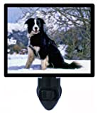 Dog Night Light - Border Collie