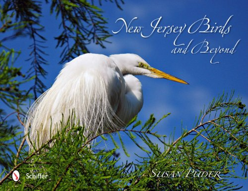 New Jersey Birds and Beyond pdf