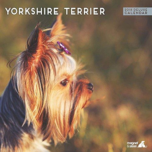Yorkshire Terrier 2018 Deluxe Calendar