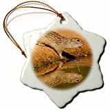 3dRose Danita Delimont - rodents - USA, Texas, Hidalgo County. Mexican ground squirrel drinking. - 3 inch Snowflake Porcelain Ornament (orn_260099_1)