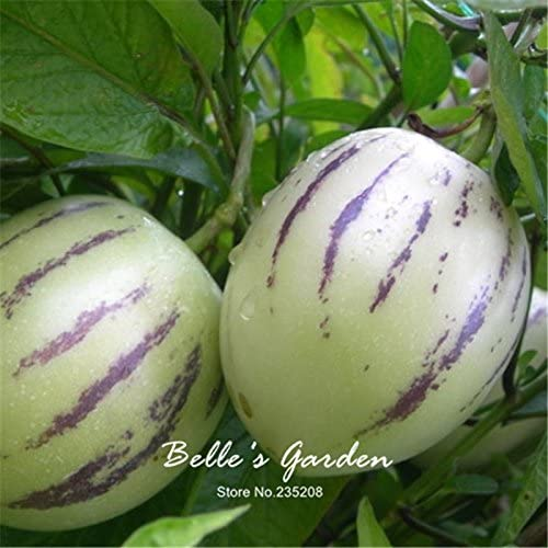 20pcs Pepino Seeds Solanum Muricatum Melon Pear Fruit Seeds Home Garden Bonsai Plant DIY