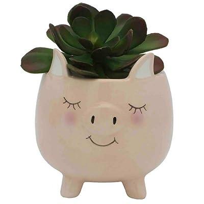 Streamline Ceramic Pig Planter Pot : Garden & Outdoor